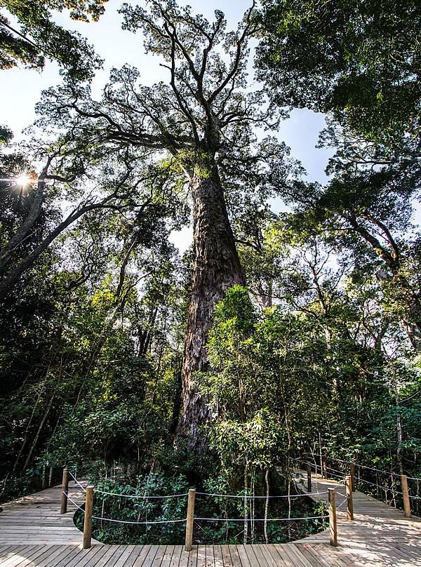 the_big_tree.jpg